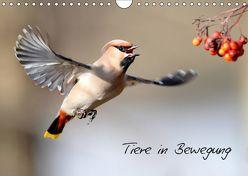 Tiere in Bewegung (Wandkalender 2019 DIN A4 quer) von Bachmeier,  Günter