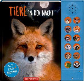 Tiere in der Nacht von Baier,  Katja