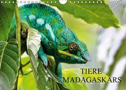 Tiere Madagaskars (Wandkalender 2019 DIN A4 quer) von Baur,  Céline