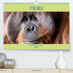 Tiere Schau mir in die Augen (Premium, hochwertiger DIN A2 Wandkalender 2020, Kunstdruck in Hochglanz) von Joecks,  Armin