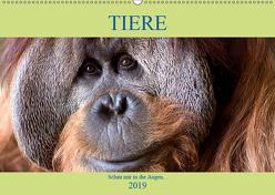 Tiere Schau mir in die Augen (Wandkalender 2019 DIN A2 quer) von Joecks,  Armin