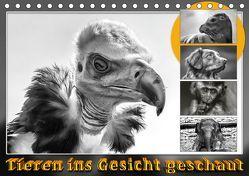 Tieren ins Gesicht geschaut (Tischkalender 2019 DIN A5 quer) von Gödecke,  Dieter
