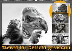 Tieren ins Gesicht geschaut (Wandkalender 2019 DIN A2 quer) von Gödecke,  Dieter