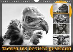 Tieren ins Gesicht geschaut (Wandkalender 2019 DIN A4 quer) von Gödecke,  Dieter