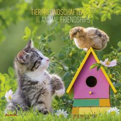 Tierfreundschaften 2020 – Animal Friendships – Wandkalender – Broschürenkalender (30 x 60 geöffnet) – Tierkalender – Wandplaner von ALPHA EDITION