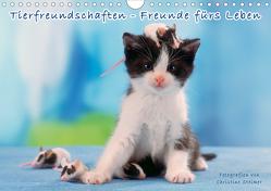 Tierfreundschaften – Freunde fürs Leben (Wandkalender 2020 DIN A4 quer) von Steimer,  Christine