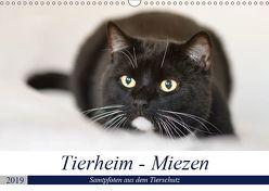 Tierheim – Miezen (Wandkalender 2019 DIN A3 quer) von Metternich,  Doris