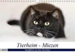 Tierheim – Miezen (Wandkalender 2019 DIN A4 quer) von Metternich,  Doris