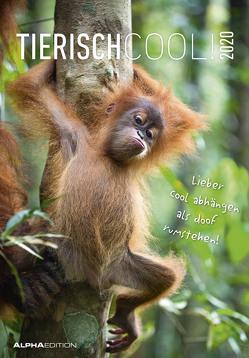 Tierisch cool! 2020 – Bildkalender – Humor-Kalender (24 x 34) – mit Sprüchen – Tierkalender – Wandkalender von ALPHA EDITION