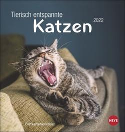 Tierisch entspannte Katzen Postkartenkalender 2022 von Heye