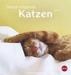 Tierisch entspannte Katzen Postkartenkalender – Kalender 2019 von Heye