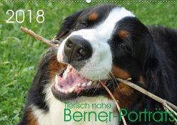 Tierisch nahe Berner-Porträts (Wandkalender 2018 DIN A2 quer) von Brenner,  Sonja