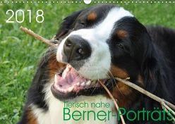 Tierisch nahe Berner-Porträts (Wandkalender 2018 DIN A3 quer) von Brenner,  Sonja