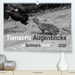 Tierische Augenblicke in Schwarz-Weiß (Premium, hochwertiger DIN A2 Wandkalender 2020, Kunstdruck in Hochglanz) von Drews,  Marianne