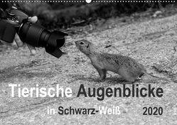 Tierische Augenblicke in Schwarz-Weiß (Wandkalender 2020 DIN A2 quer) von Drews,  Marianne