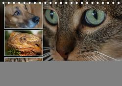 Tierische Augenblicke-Spiegel der Seele (Tischkalender 2019 DIN A5 quer) von LaPics