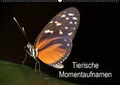 Tierische Momentaufnahmen (Wandkalender 2019 DIN A2 quer) von Krakowski,  Conny