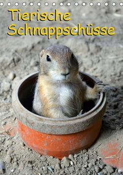 Tierische Schnappschüsse (Tischkalender 2021 DIN A5 hoch) von Kaina,  Miriam