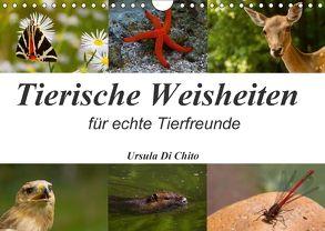 Tierische Weisheiten (Wandkalender 2018 DIN A4 quer) von Di Chito,  Ursula