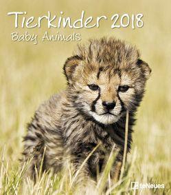 Tierkinder 2018