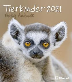 Tierkinder 2021 – Wand-Kalender – 30×34 – Baby-Animals