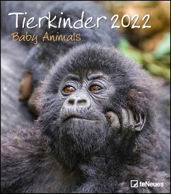 Tierkinder 2022 – Wand-Kalender – 30×34 – Baby-Animals