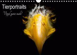 Tierportraits – Vögel ganz nah (Wandkalender 2019 DIN A4 quer) von Honold,  Alexander