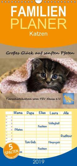 Tierschutzkatzen vom TSV-Neuss – Großes Glück auf sanften Pfoten – Familienplaner hoch (Wandkalender 2019 , 21 cm x 45 cm, hoch) von B,  Jane