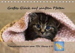 Tierschutzkatzen vom TSV-Neuss – Großes Glück auf sanften Pfoten (Tischkalender 2019 DIN A5 quer) von B,  Jane