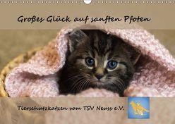 Tierschutzkatzen vom TSV-Neuss – Großes Glück auf sanften Pfoten (Wandkalender 2019 DIN A3 quer) von B,  Jane