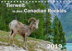 Tierwelt in den Canadian Rockies (Tischkalender 2019 DIN A5 quer) von Wilczek,  Dieter-M.