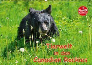 Tierwelt in den Canadian Rockies (Wandkalender 2018 DIN A2 quer) von Wilczek,  Dieter-M.