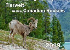 Tierwelt in den Canadian Rockies (Wandkalender 2019 DIN A2 quer) von Wilczek,  Dieter-M.