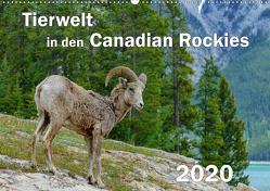 Tierwelt in den Canadian Rockies (Wandkalender 2020 DIN A2 quer) von Wilczek,  Dieter-M.