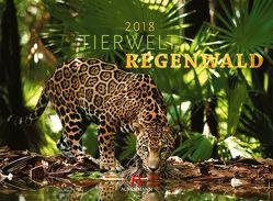 Tierwelt Regenwald 2018