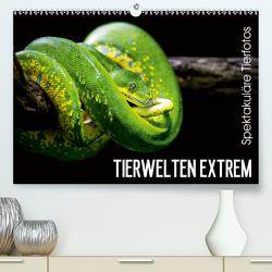 Tierwelten Extrem – Spektakuläre Tierfotos (Premium, hochwertiger DIN A2 Wandkalender 2020, Kunstdruck in Hochglanz) von Colista,  Christian