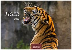 Tiger 2022 S 24x35cm