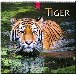 Tiger von Redaktion Verlagshaus Würzburg,  Bildagentur