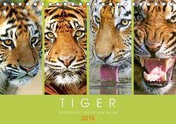 Tiger: Gestreifte Jäger aus Asien (Tischkalender 2018 DIN A5 quer) von CALVENDO,  k.A.