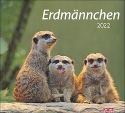 times&more Erdmännchen Bildkalender 2022 von Heye