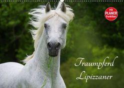 Traumpferd Lipizzaner (Wandkalender 2019 DIN A2 quer) von Starick,  Sigrid