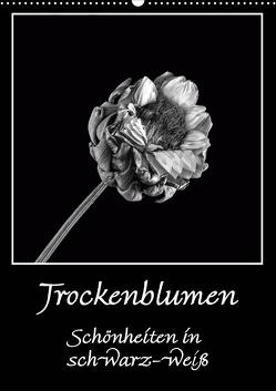 Trockenblumen Schönheiten in schwarz-weiß (Wandkalender 2021 DIN A2 hoch) von Beuck,  Angelika