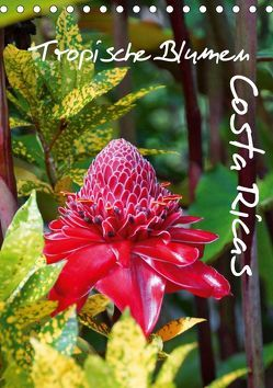 Tropische Blumen Costa Ricas (Tischkalender 2019 DIN A5 hoch) von M.Polok
