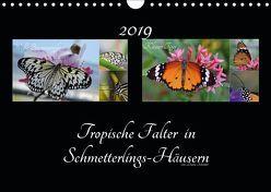 Tropische Falter in Schmetterlings-Häusern (Wandkalender 2019 DIN A4 quer) von Schröder,  Diana