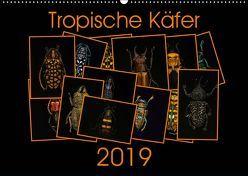 Tropische Käfer (Wandkalender 2019 DIN A2 quer) von Körner,  Burkhard