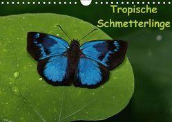 Tropische Schmetterlinge (Wandkalender immerwährend DIN A4 quer) von Dummermuth,  Stefan