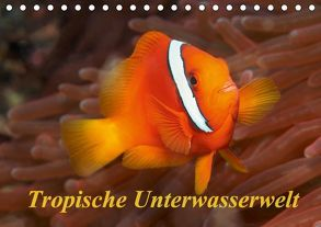 Tropische Unterwasserwelt (Tischkalender 2018 DIN A5 quer) von Rauchenwald,  Martin
