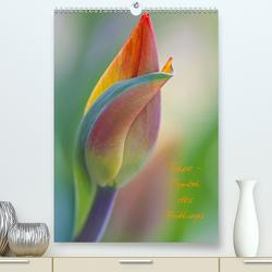 Tulpe – Symbol des Frühlings (Premium, hochwertiger DIN A2 Wandkalender 2021, Kunstdruck in Hochglanz) von Kuhlmann,  Marita