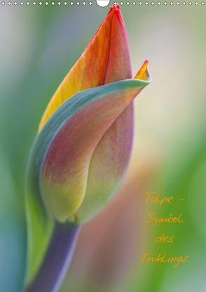 Tulpe – Symbol des Frühlings (Wandkalender 2021 DIN A3 hoch) von Kuhlmann,  Marita