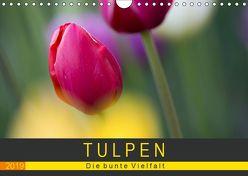 Tulpen – die bunte Vielfalt (Wandkalender 2019 DIN A4 quer) von Schürholz,  Peter